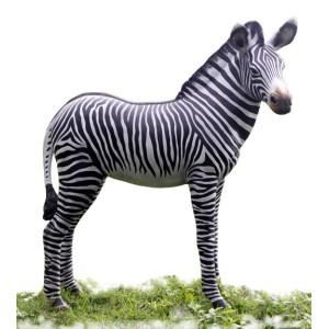 Zebra föl i naturlig storlek 110 cm