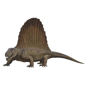 Dinosaurie Dimetrodon 376 cm
