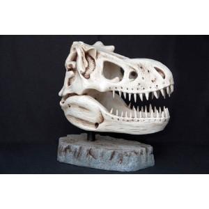 Dinosaurie T-Rex skalle 66 cm
