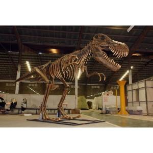 "Dinosaurie T-Rex Fossil  Skelett  8,8 m ""Begär offert"""