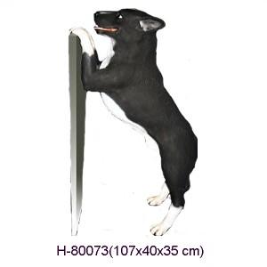 AUSTRALIAN CATTLEDOG (Blue Heeler) 107 CM