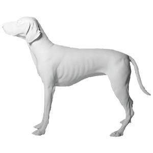 Skylthund stående